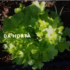 gardenhorta